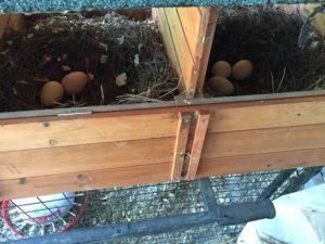 nest eggs 0622