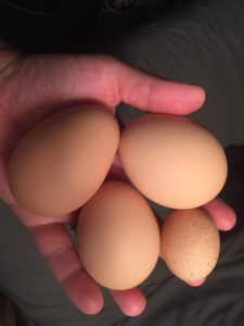 tiny egg2