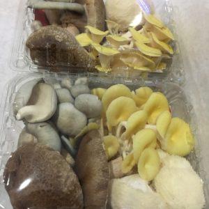 Prayer Mountain Mushrooms – Mushroom Medley