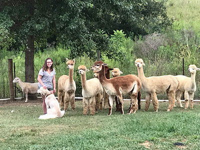Ashley-alpacas